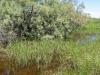 Lestes microstigma - Habitat 2 / by Gerd-Michael Heinze from Germany
