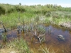 Lestes microstigma - Habitat / by Gerd-Michael Heinze from Germany